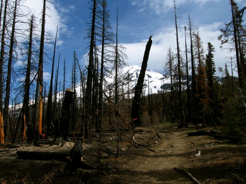 Due to the 2012 burn, you can now see Mt. Adams from the trailhead and along the approach as in this photo, June 2013 by Daryl Greaser