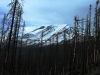 Mt. Adams\' lower, southern slopes after the 2012 burn, June 2013 by Daryl Greaser