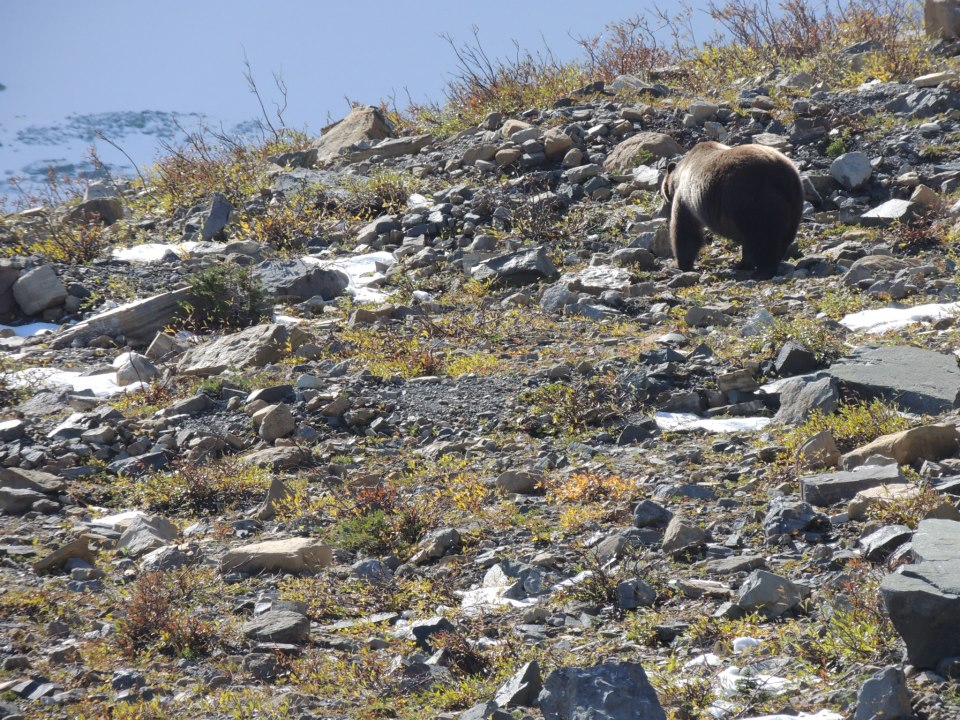 This grizzly was only about 40 feet from us!